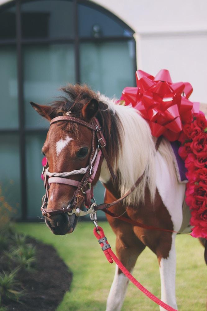 Comprare Un Cavallo Visto In Foto